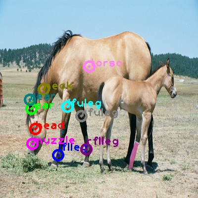 2008_005304-horse_0.png
