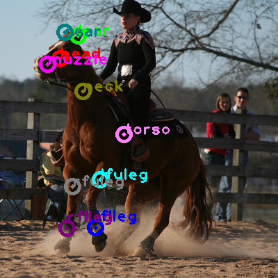 2008_005365-horse_0.png