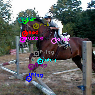 2008_005408-horse_0.png