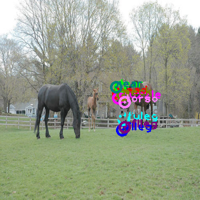 2008_005473-horse_0.png