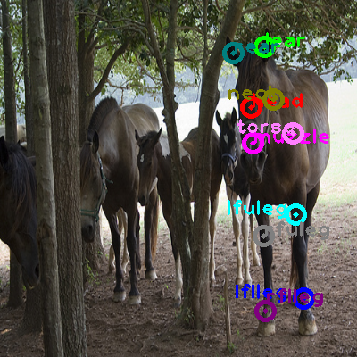 2008_005818-horse_0.png