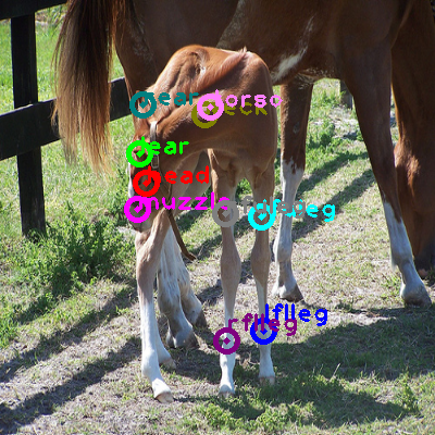 2008_006028-horse_0.png
