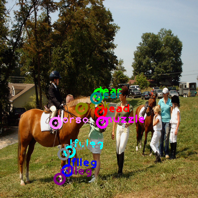 2008_006087-horse_0.png
