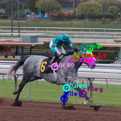 2008_006397-horse_0.png