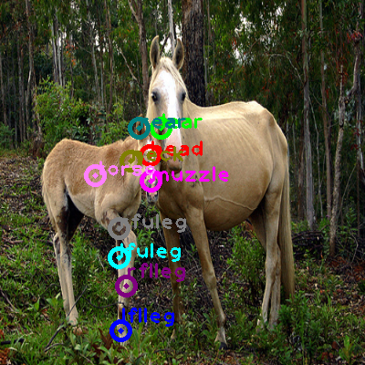 2008_006429-horse_0.png