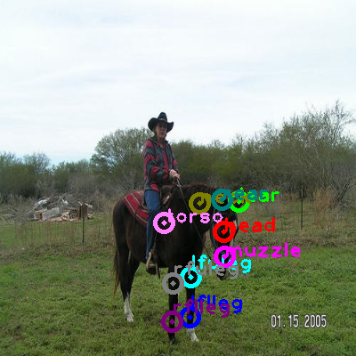 2008_007392-horse_0.png