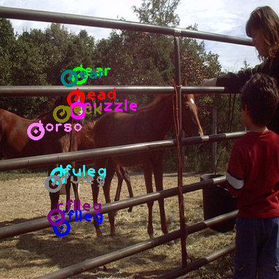 2008_007524-horse_0.png
