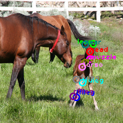2008_007897-horse_0.png
