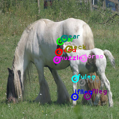 2008_007945-horse_0.png