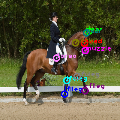 2008_008212-horse_0.png