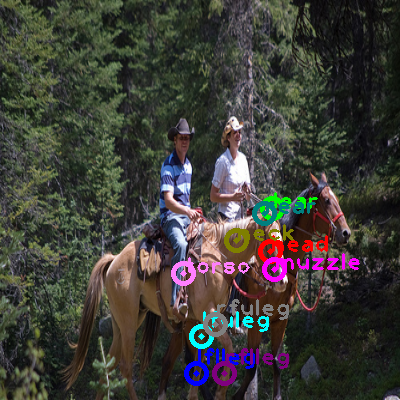 2009_000017-horse_1.png