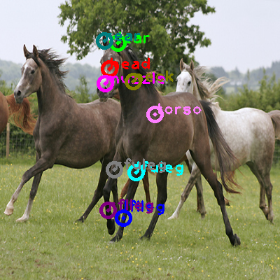 2009_000412-horse_0.png