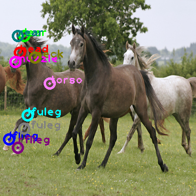 2009_000412-horse_1.png