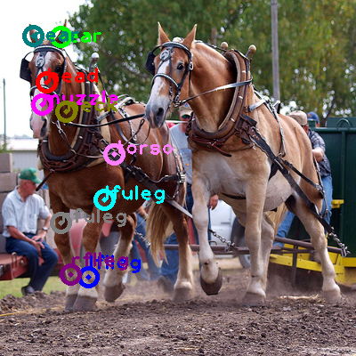 2009_000565-horse_0.png