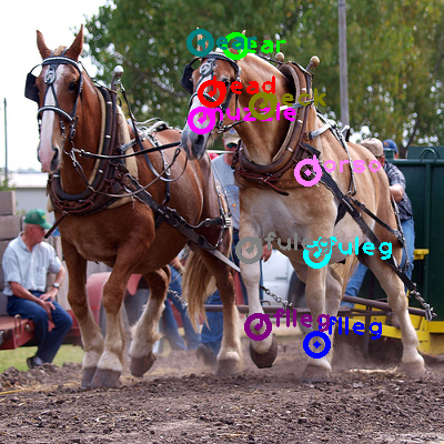 2009_000565-horse_1.png