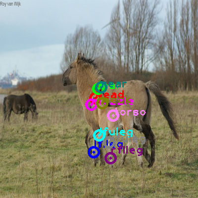 2009_000852-horse_0.png