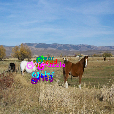2009_001184-horse_0.png