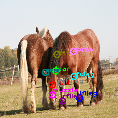 2009_001724-horse_0.png