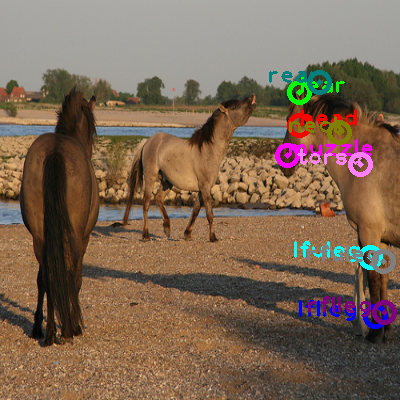 2009_001911-horse_0.png