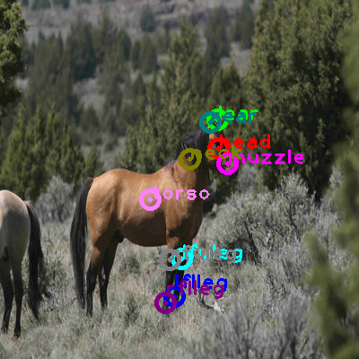 2009_003082-horse_0.png