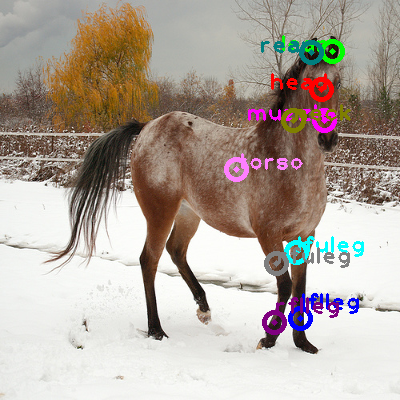 2009_003533-horse_0.png
