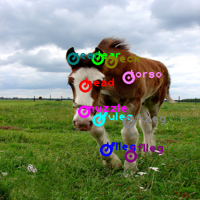 2009_003804-horse_0.png