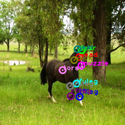 2009_004454-horse_0.png