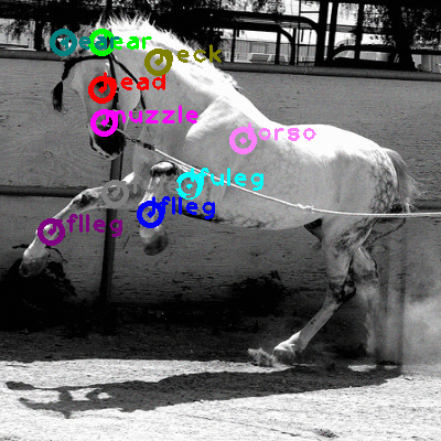 2009_005161-horse_0.png