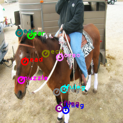 2009_005217-horse_0.png