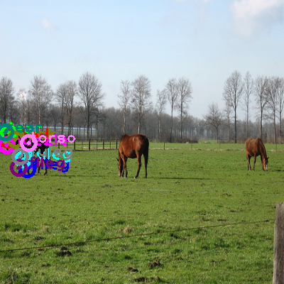 2010_000138-horse_0.png
