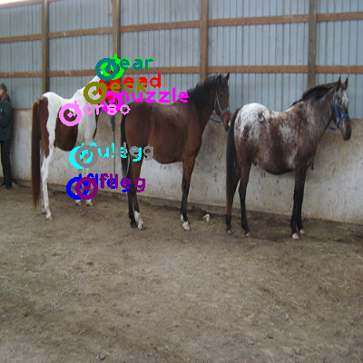 2010_000413-horse_0.png