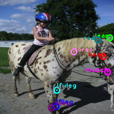 2010_001184-horse_0.png