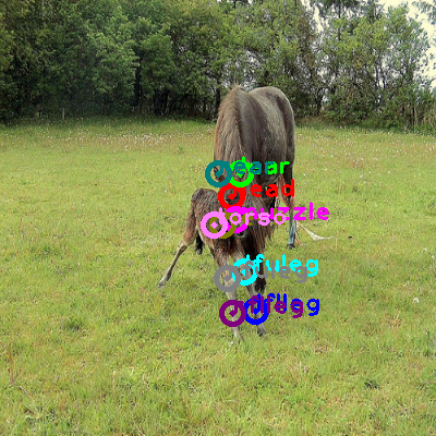 2010_003270-horse_0.png