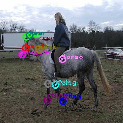 2010_005019-horse_0.png
