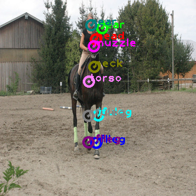 2010_005748-horse_0.png
