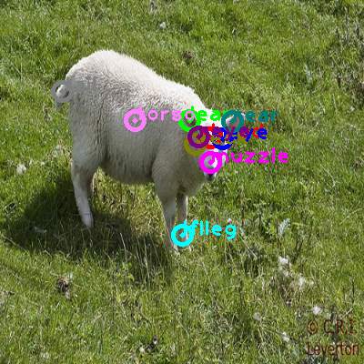 2008_005938-sheep_0.png