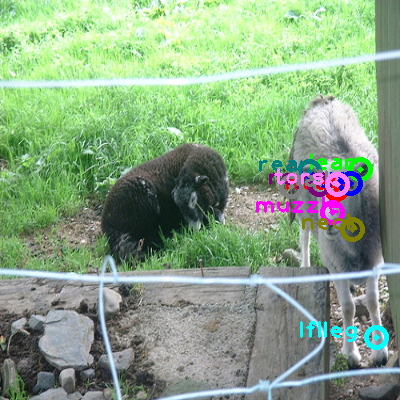 2009_000675-sheep_0.png