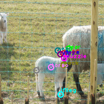 2009_001505-sheep_0.png