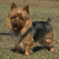 Dog Breeds For Kids Hypoallergenic