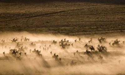 Riders on Horseback during Primal Quest adventure race