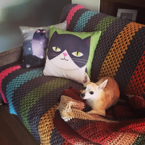 Angela Martini's Pillows Are Dog Friendly