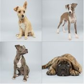 This Year's Puppy Bowl Stars by Keith Barraclough