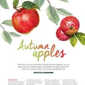 Lyn Alice's Autumn Apple Illo for My Countryside Magazine