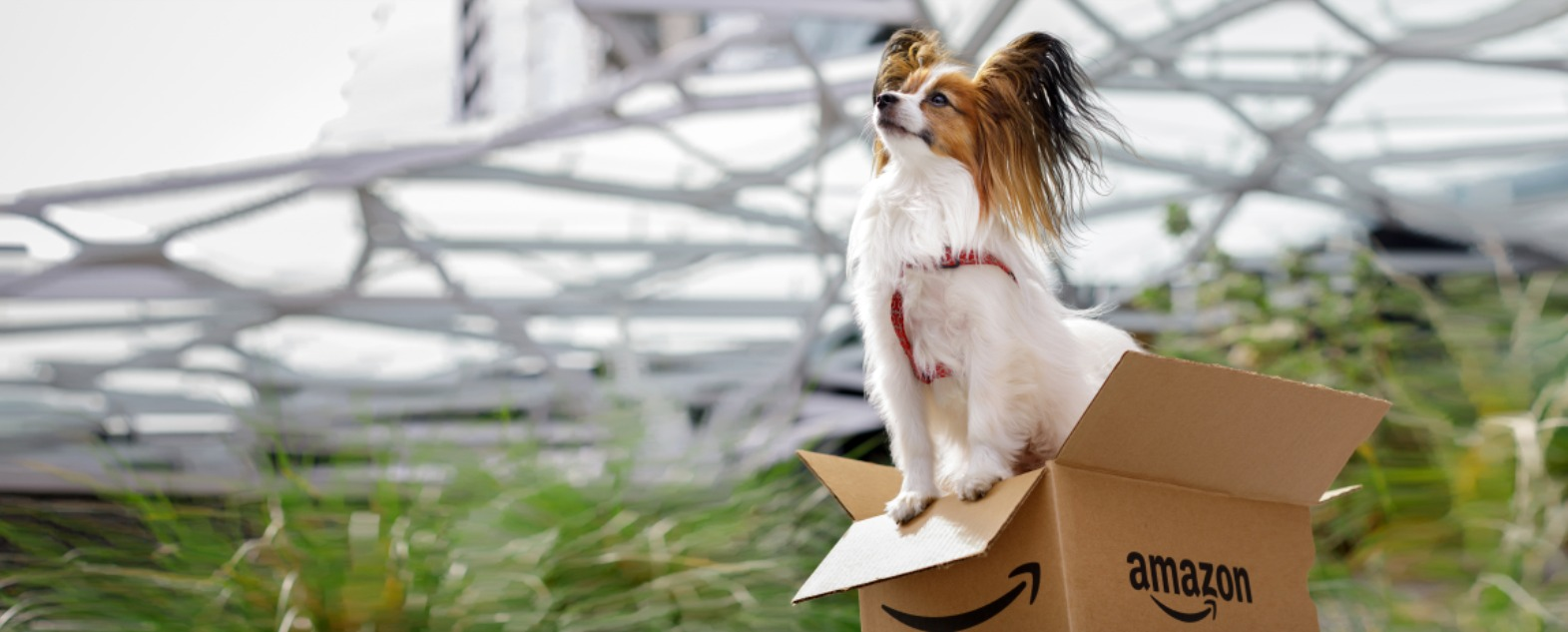 Amazon Dog in Amazon box