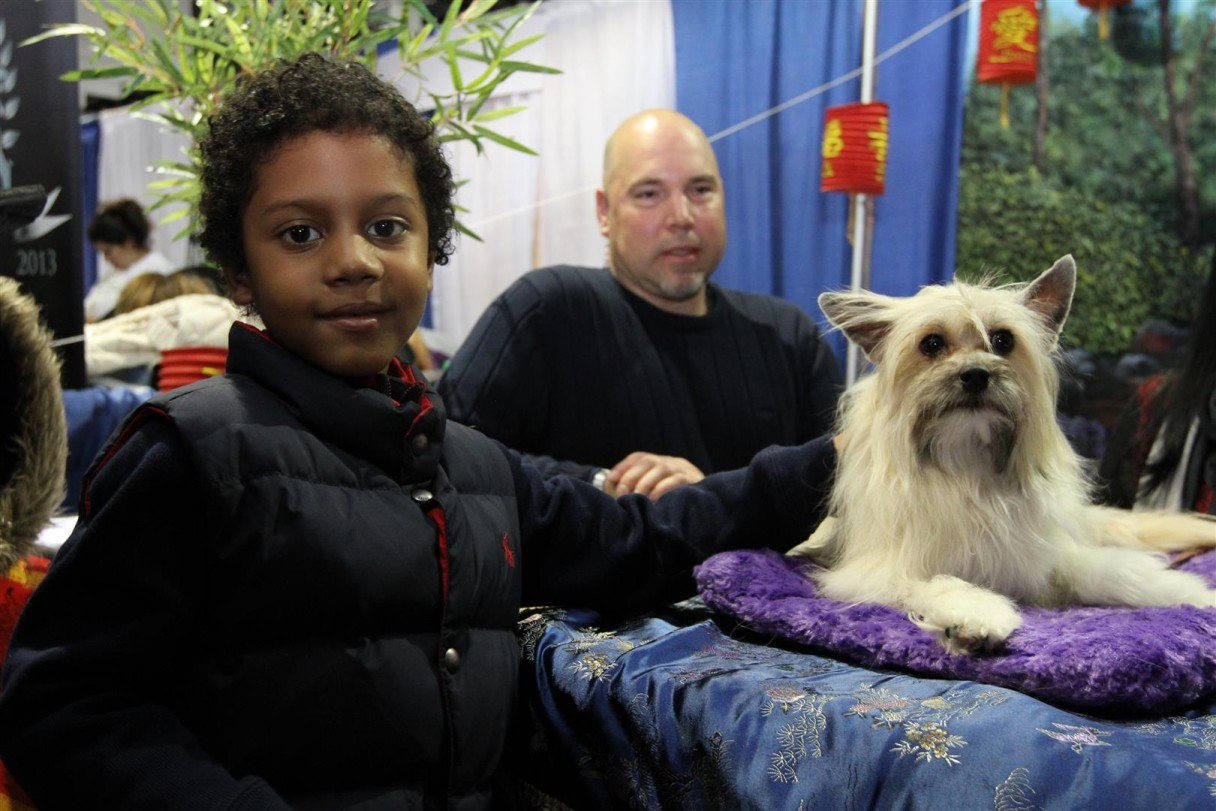 akc meet the breeds 2015 nyc