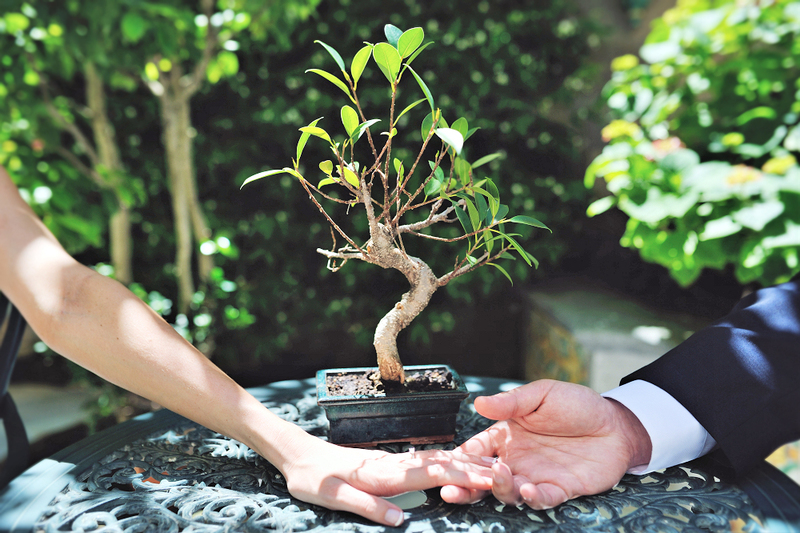 image is a photograph taken outdoors of a couples hands, clasped in front of a small potted bonsai tree that has been used as part of a tree planting unity ritual at their wedding
