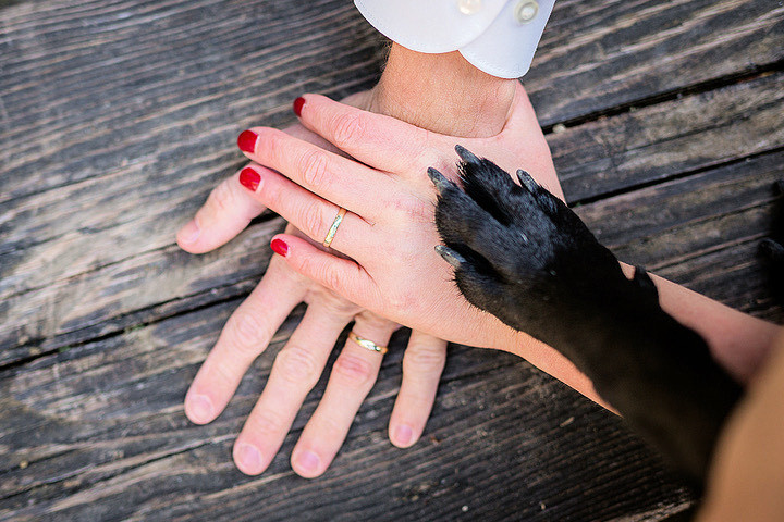 image is a photograph of a wedding couple's hands resting on top of each other showing their wedding rings, and a dog paw setting on top