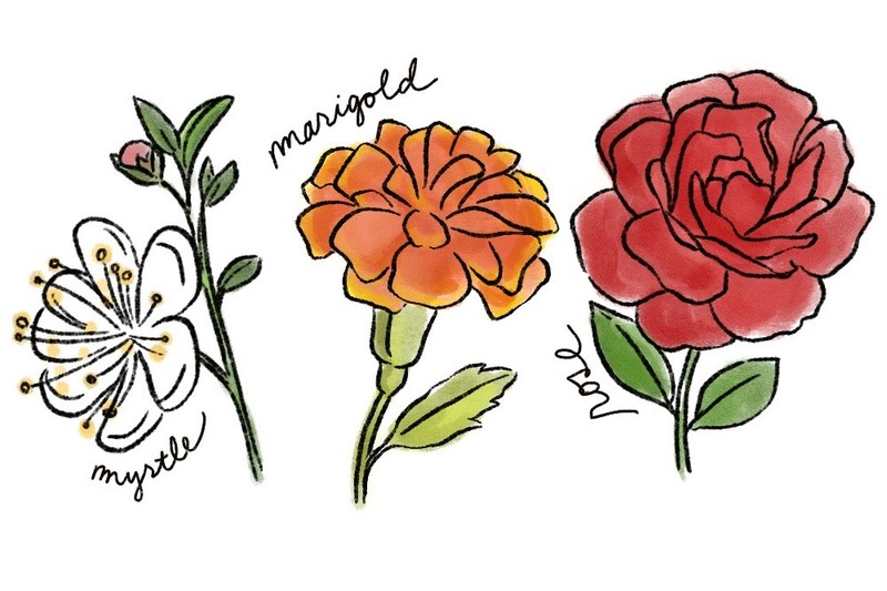 illustrations of myrtle flower, marigolds, and red rose, the symbolism of flowers at a wedding