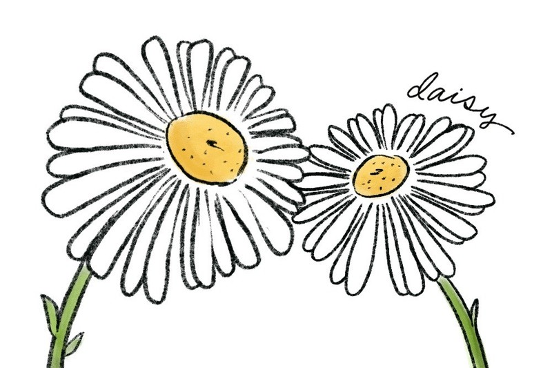 illustration of daisy flower meaning