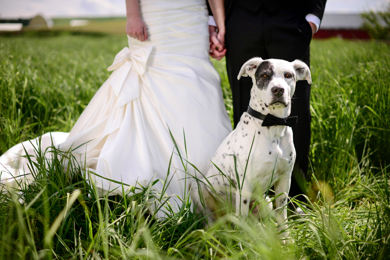 Couple and dog wedding
